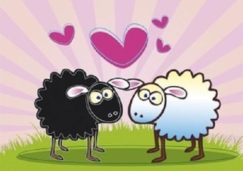 ovelhinhas amor